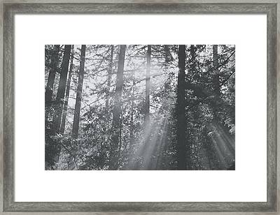 Splendor Framed Print by Laurie Search