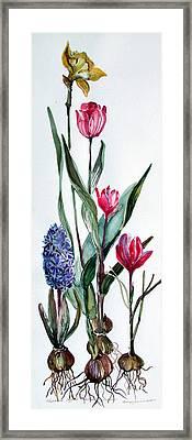 Spring Bulbs Framed Print by Mindy Newman