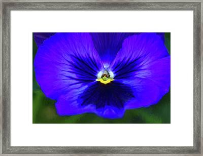 Springtime Blues - Paint Framed Print by Steve Harrington