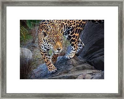 Stalker Framed Print by Jamie Pham