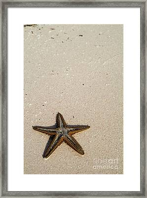 Starfish Partially Buried In White Sand Framed Print by Sami Sarkis
