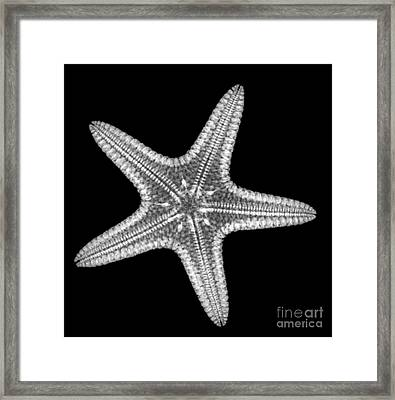 Starfish Framed Print by Ted Kinsman