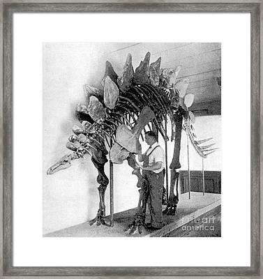 Stegosaurus Framed Print by Science Source