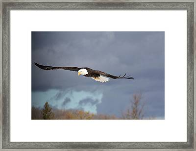 Stormy Flight Framed Print by Teresa McGill