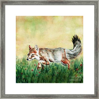 Summer Fox Framed Print by Antony Galbraith