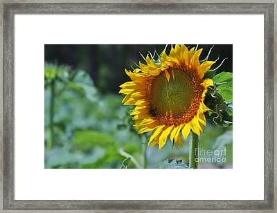 Sunflower Series Framed Print by Wendy Mogul