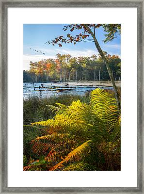 Sunrise In The Swamp Framed Print by Bill Wakeley