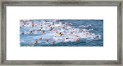 Swimmers In Motion At The Start Framed Print by Panoramic Images