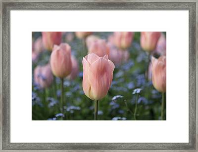 Symphony Framed Print by Connie Handscomb