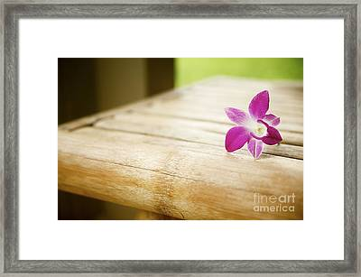 Tabletop Orchid Framed Print by Kicka Witte - Printscapes