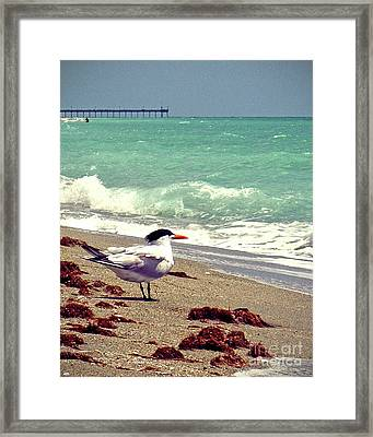 Terns On The Beach Framed Print by Chris Andruskiewicz