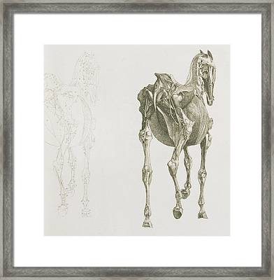 The Anatomy Of The Horse Framed Print by George Stubbs