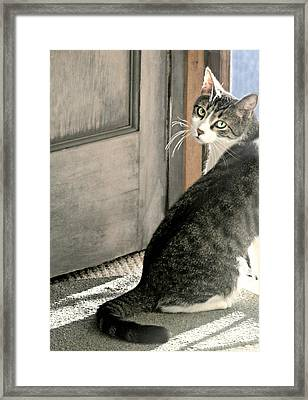 The Back Door Framed Print by Diana Angstadt