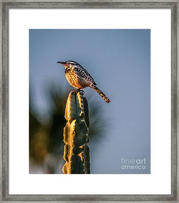 The Cactus Wren Framed Print by Robert Bales