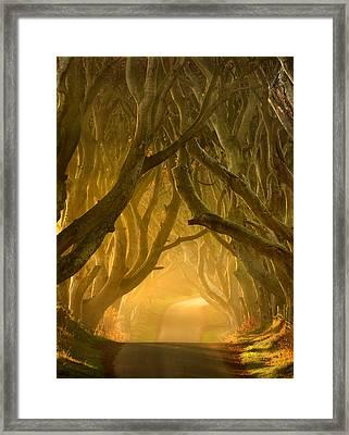 The Dark Hedges IIi Framed Print by Pawel Klarecki