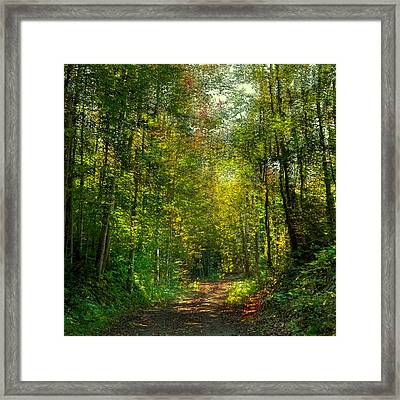 The Road To Cary Lake Framed Print by David Patterson