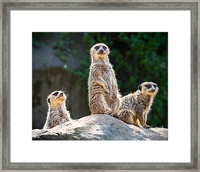 Three's Company Framed Print by Jamie Pham