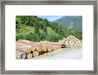 Timber Industry.  Framed Print by Ilan Rosen