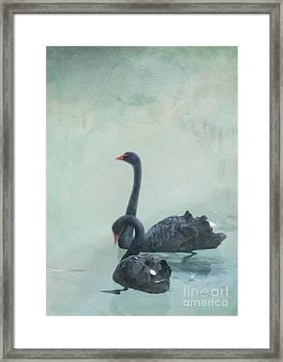 Black Swans Framed Print by Cindy Garber Iverson