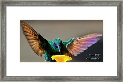 Tom Thumb, Up Close And Personal Framed Print by Al Bourassa