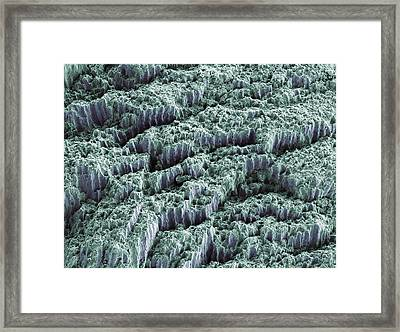 Tooth Enamel, Sem Framed Print by Steve Gschmeissner