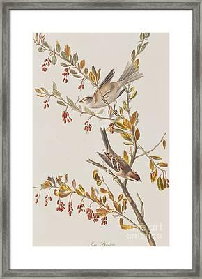 Tree Sparrow Framed Print by John James Audubon