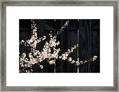 Trees - Blooming Flowers Framed Print by Donald Erickson
