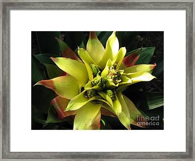 Tropical Framed Print by Amanda Barcon