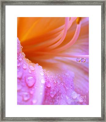 Tropical Thirst Framed Print by Krissy Katsimbras