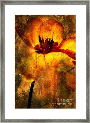 Tulip Framed Print by Bernard Jaubert