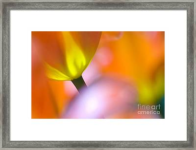 Tulips Framed Print by Silke Magino