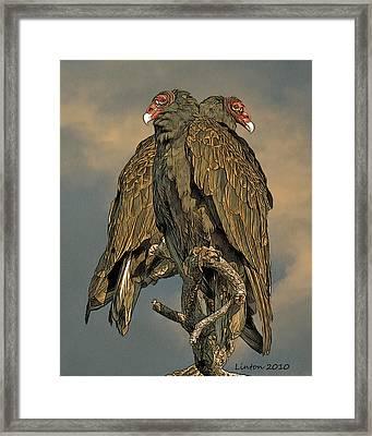 Turkey Vulture Pair Framed Print by Larry Linton