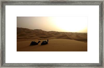 Two Camels At Sunset In The Desert Framed Print by Ralph A  Ledergerber-Photography