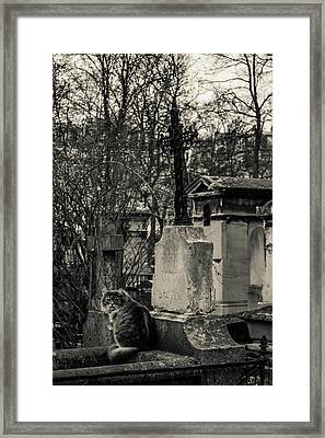 Untitled Framed Print by Nate Medvedeva