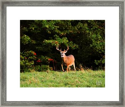 V 8 Framed Print by Brad Hoyt