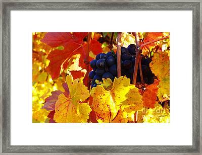 Vineyard 16 Framed Print by Xueling Zou