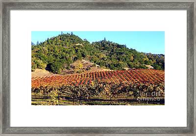 Vineyard 3 Framed Print by Xueling Zou