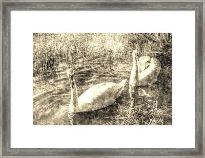 Vintage Swans Framed Print by David Pyatt