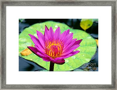 Water Lily Framed Print by Bill Brennan - Printscapes