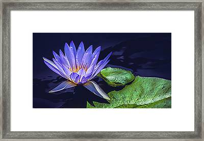 Water Lily In Lavender Framed Print by Julie Palencia