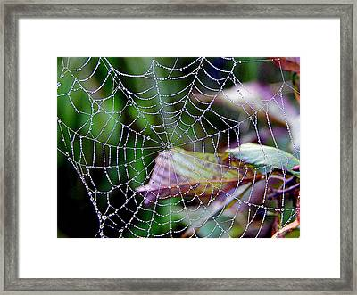 Web Of Deceit Framed Print by Karen Cook