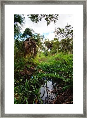 Wetlands Of Terra Ceia Preserve  Framed Print by Rich Leighton
