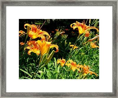 Wild Flowers Framed Print by Fareeha Khawaja