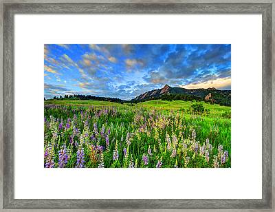 Wildflower Wonder Framed Print by Scott Mahon