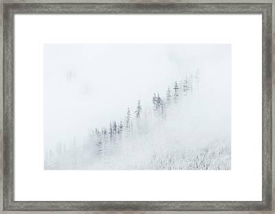 Winter Veil Framed Print by Mike  Dawson