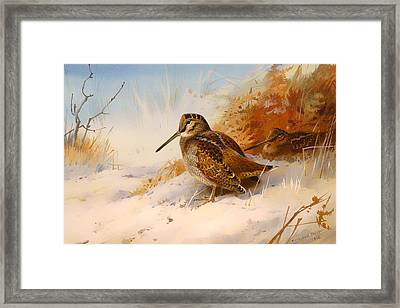 Winter Woodcock Framed Print by Mountain Dreams