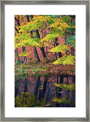 Yellow Autumn Framed Print by Karol Livote