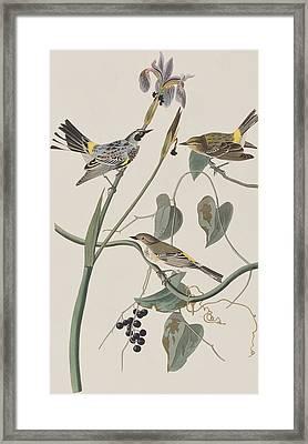 Yellow Crown Warbler Framed Print by John James Audubon