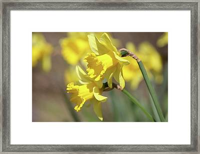 Yellow Framed Print by Mark Severn