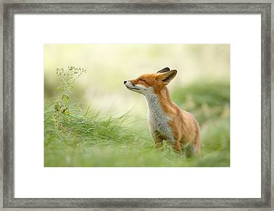 Zen Fox Series - Zen Fox Framed Print by Roeselien Raimond